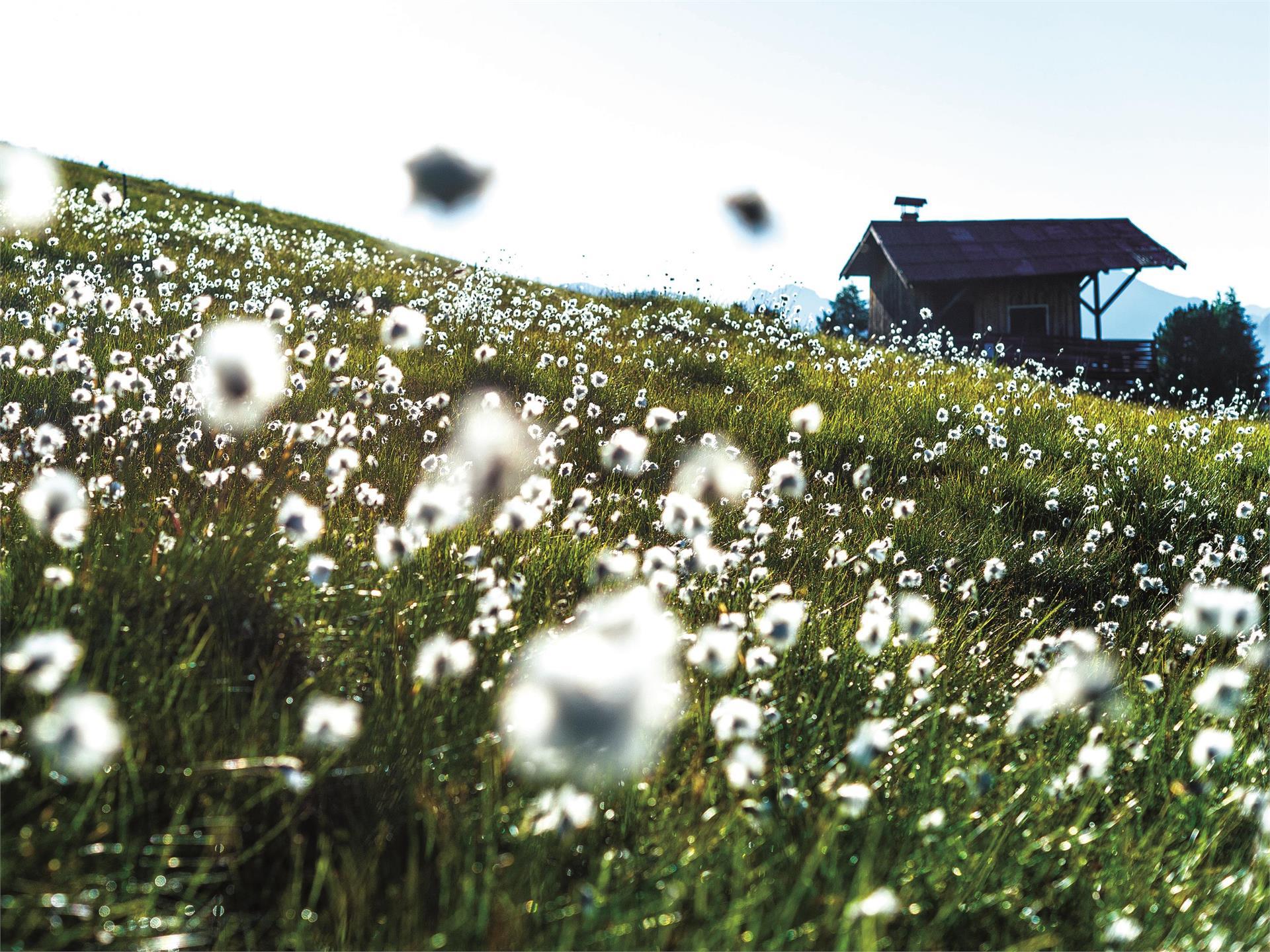 Healthy pleasure from fresh spring herbs