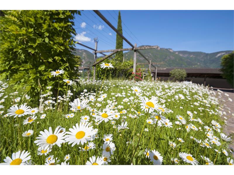 Haus Luise, Nalles, giardino, fiori