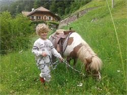 Ponyhof Holen/Olmi