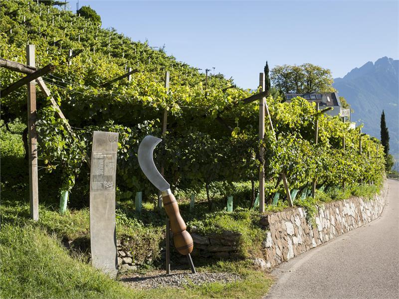 WineCulturePath