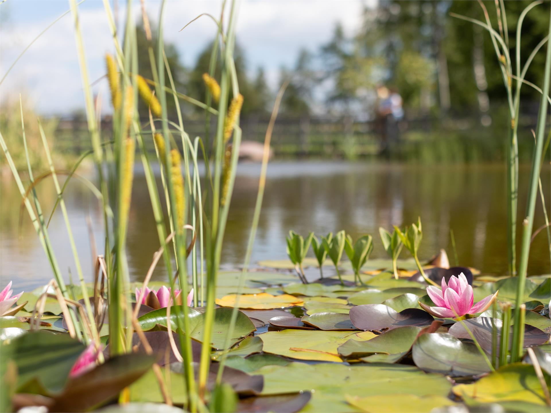 Weiher Bruggen Pond