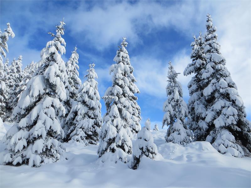 Tiefverschneite Landschaft abseits des Skigebiets