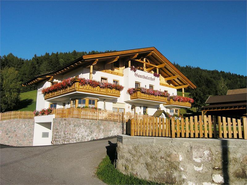 Vacanze in agriturismo - Ganthalerhof ad Avelengo, Alto Adige
