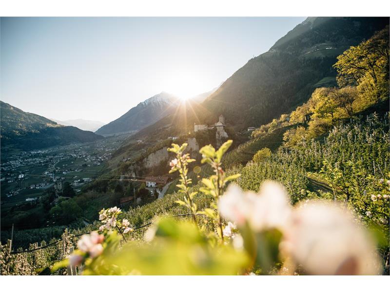 Vista dal sentiero delle mele sul Castel Tirol