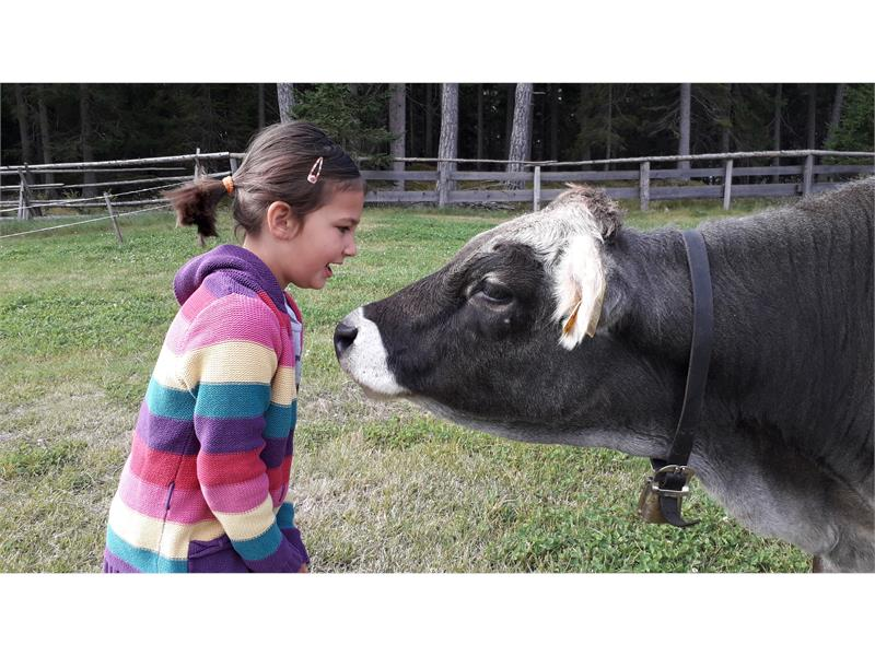 Holidays on the farm - fun for the little ones