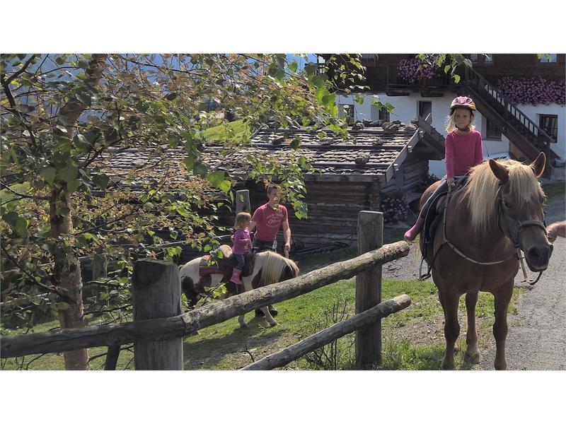 Horse riding on the Oberhof