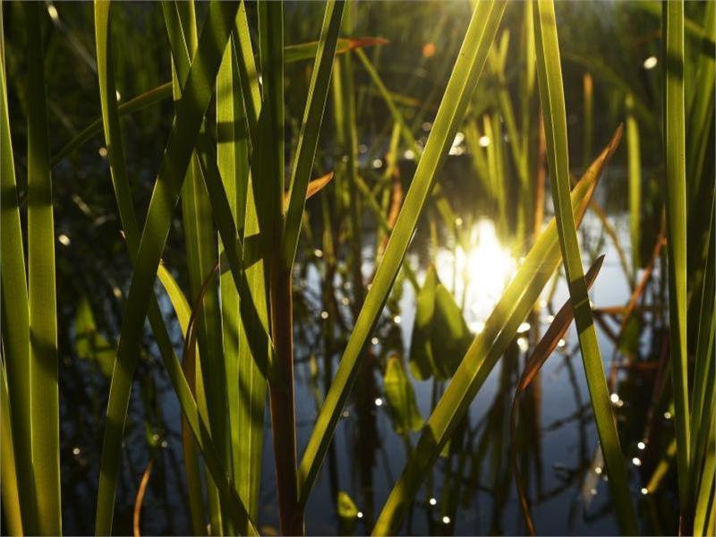 Naturbad Gargazon