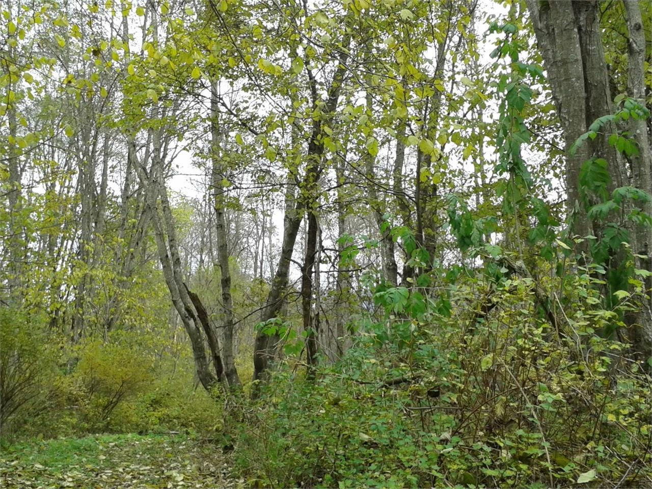 Alto Adige Balance - Escursione forest therapy con Martin Kiem
