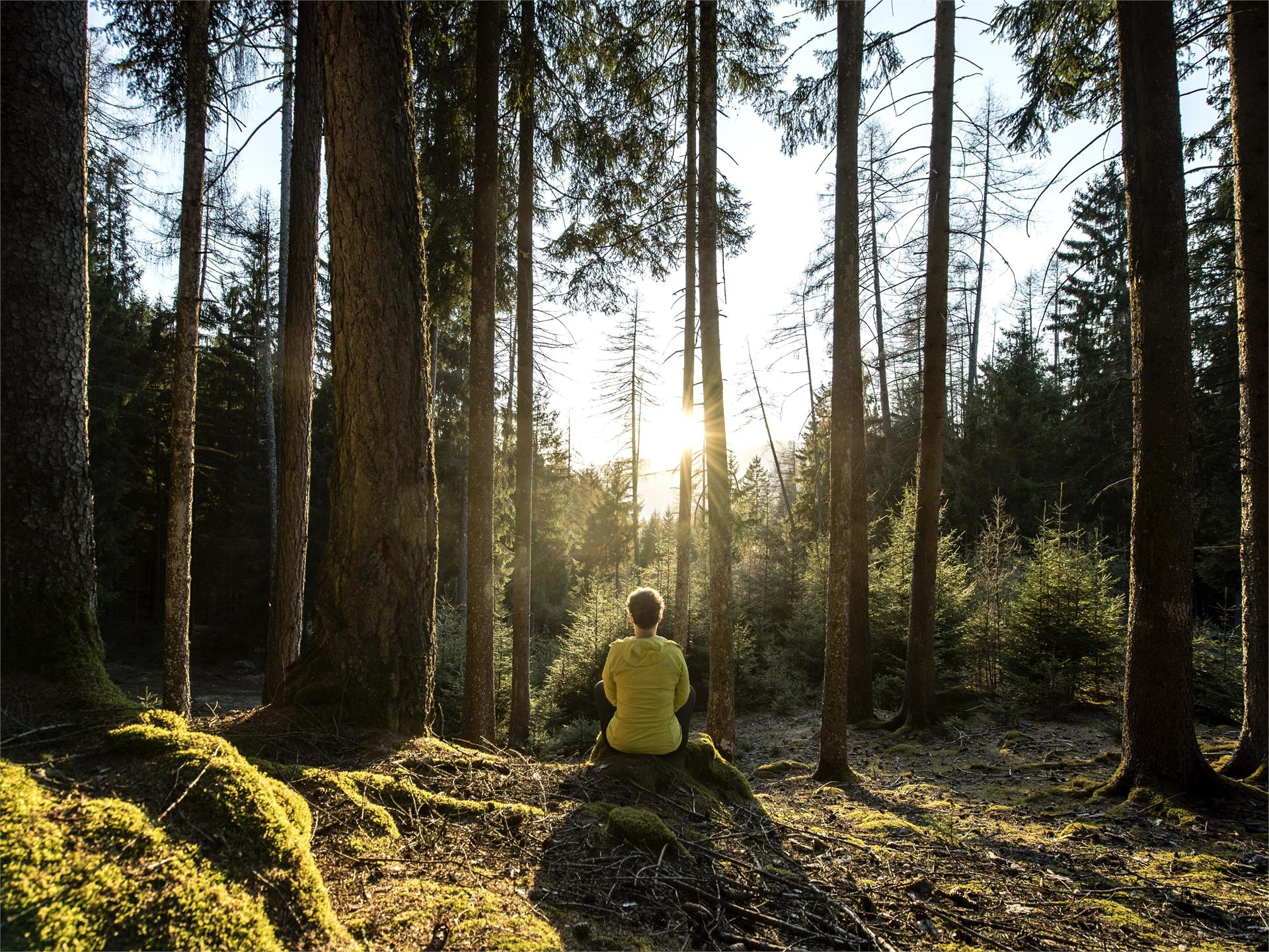 Seiser Alm Balance: Alpines Waldbaden