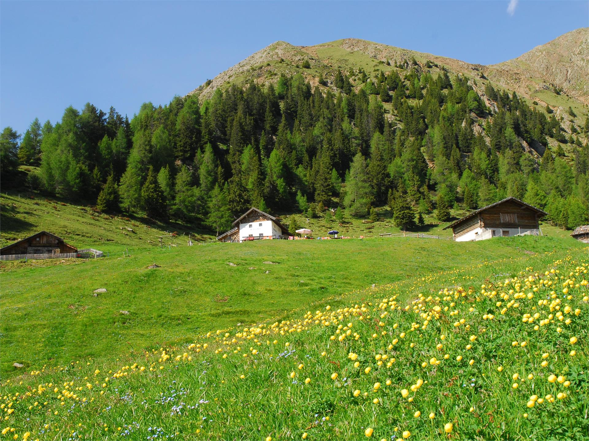 On the alpine pastures path to the Mahdalm