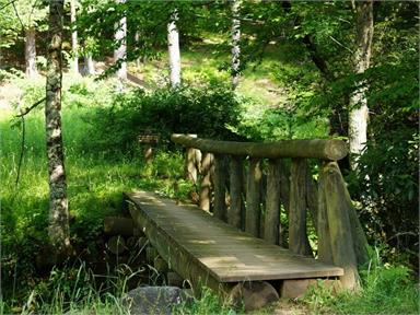 4. Südtiroler Kneippwoche - Kneipp für mich®: Waldbaden