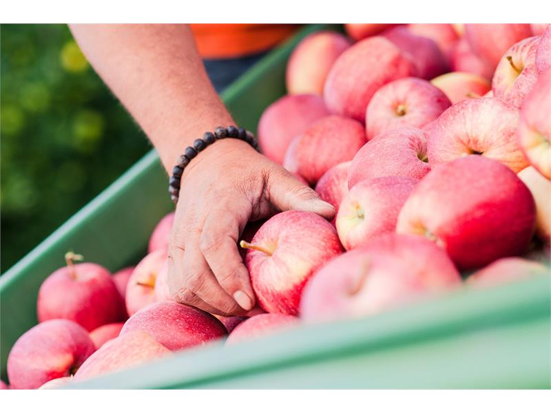 Unsere Äpfel