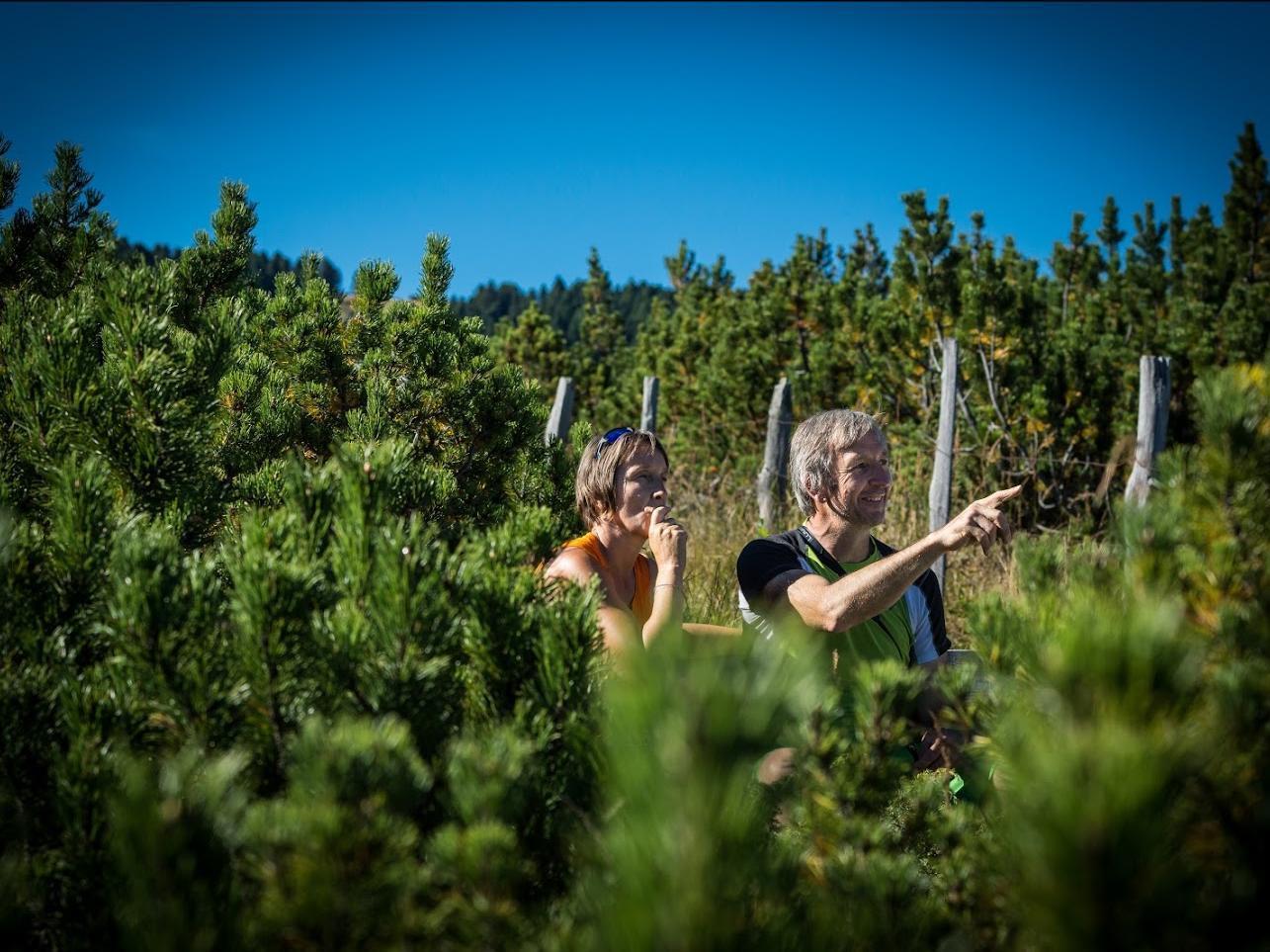 Mountain Days: Im Sonnenaufgang zur Latschenbrennerei