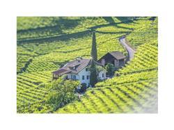 Wine Estate Untermoserhof