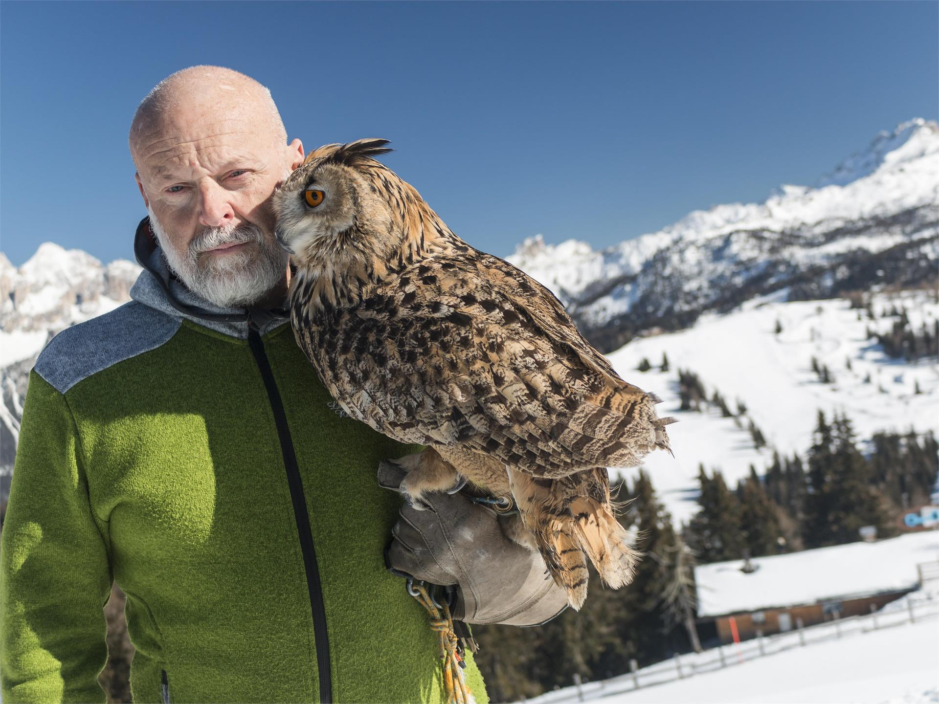 Birds of prey in the Dolomites