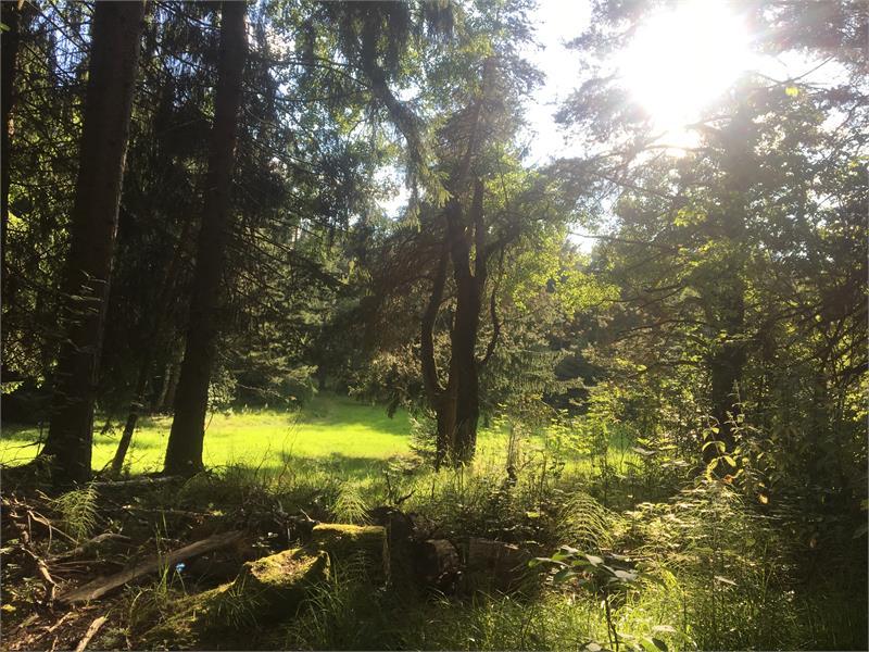 Natur entlang des Weges