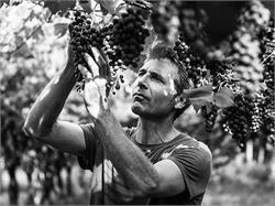 Kellerei Reyter - Bio Weine aus Südtirol