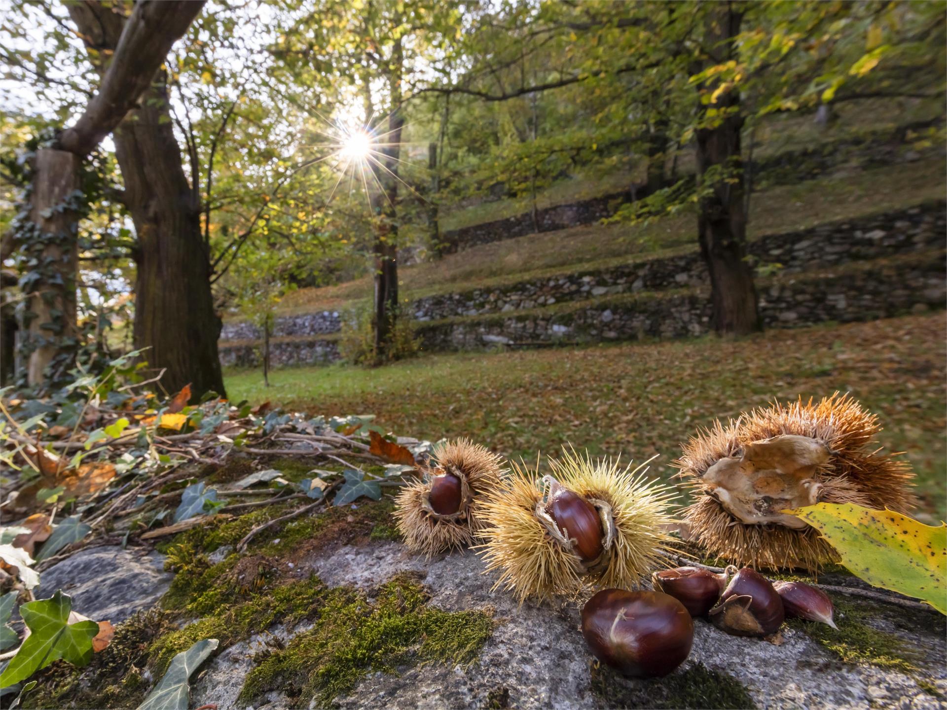 Escursione alla scoperta delle castagne