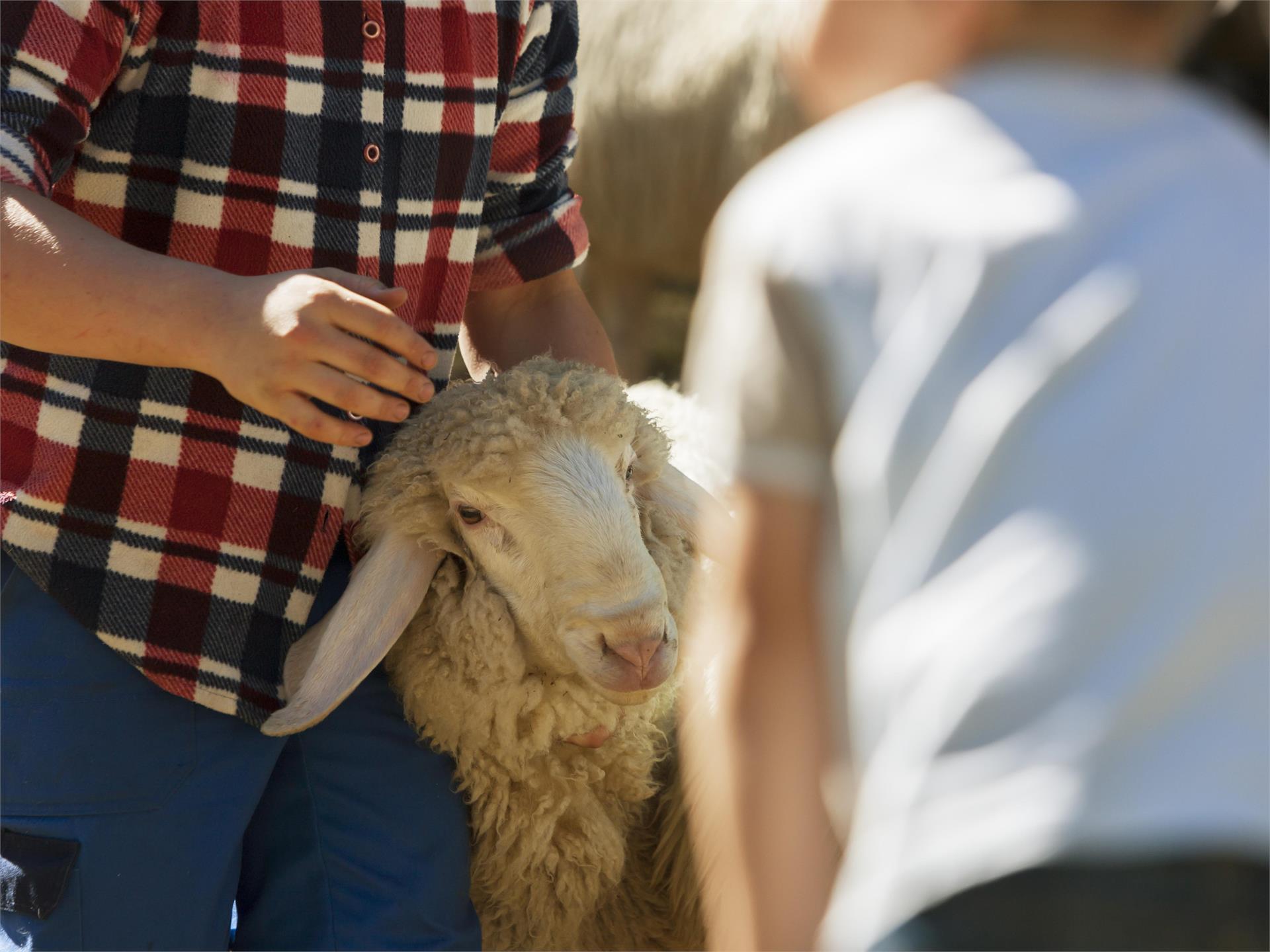 Ein Vormittag am Bauernhof