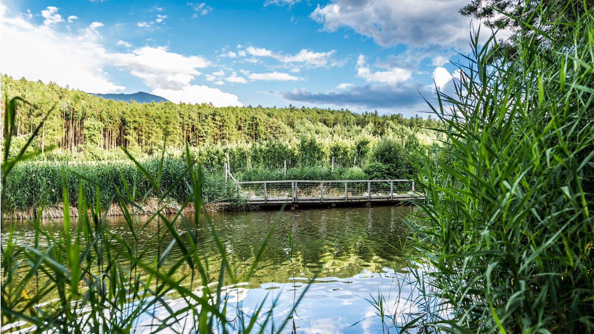 Sentiero didattico naturalistico Palù Raier