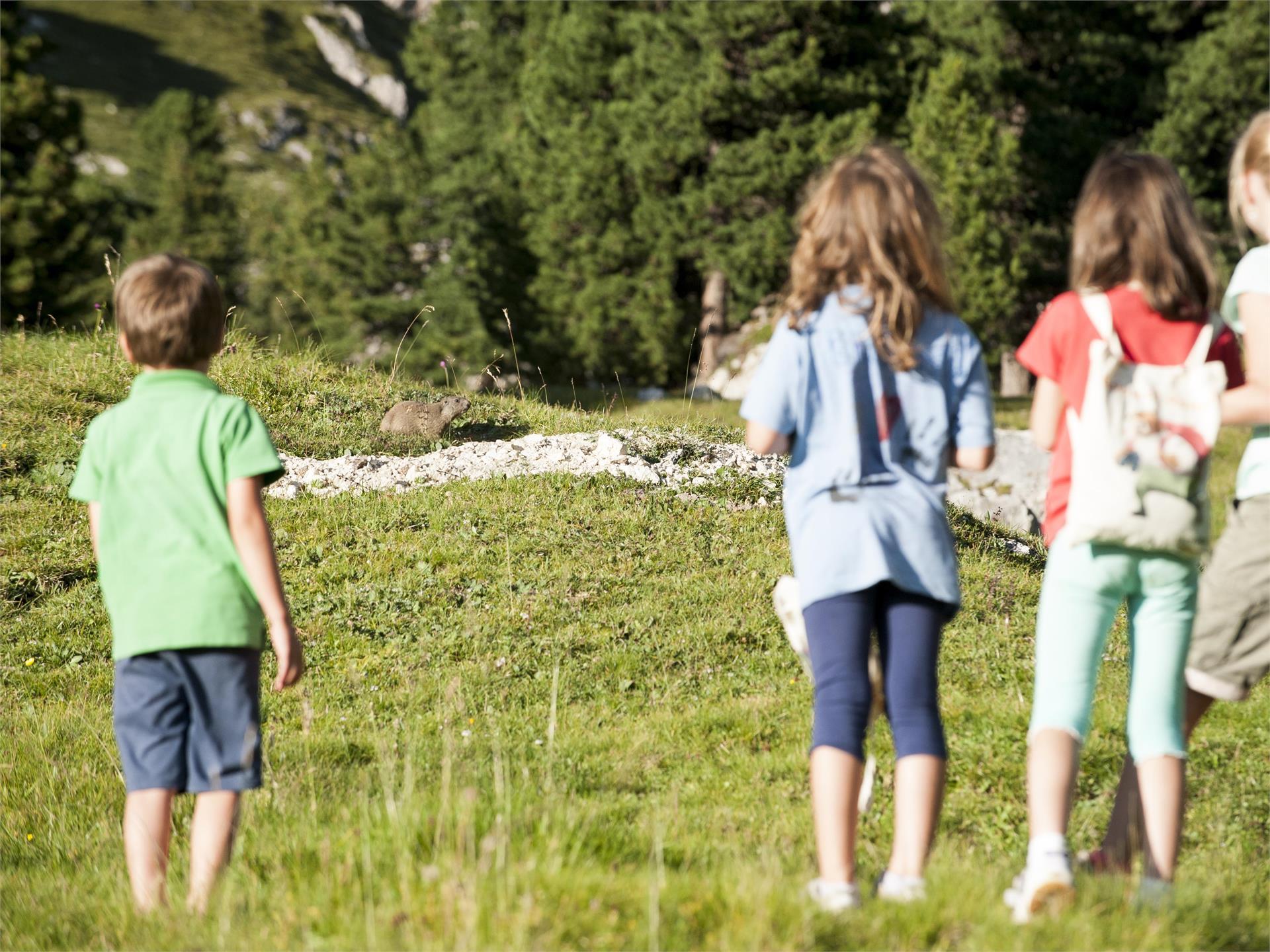 Dolomiti Ranger - Wildbeobachtung bei Tageseinbruch