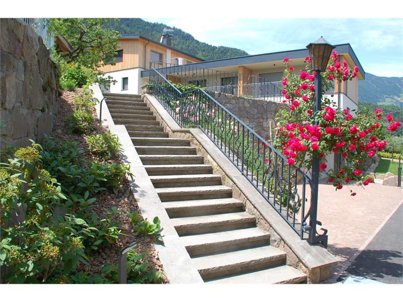 Staircase with flowering rose