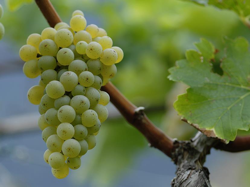 Degustazione di vini all' Azienda vinicola Unterortl