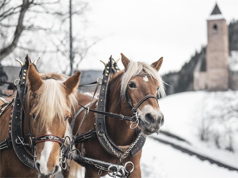 Kutschenfahrten im Winter