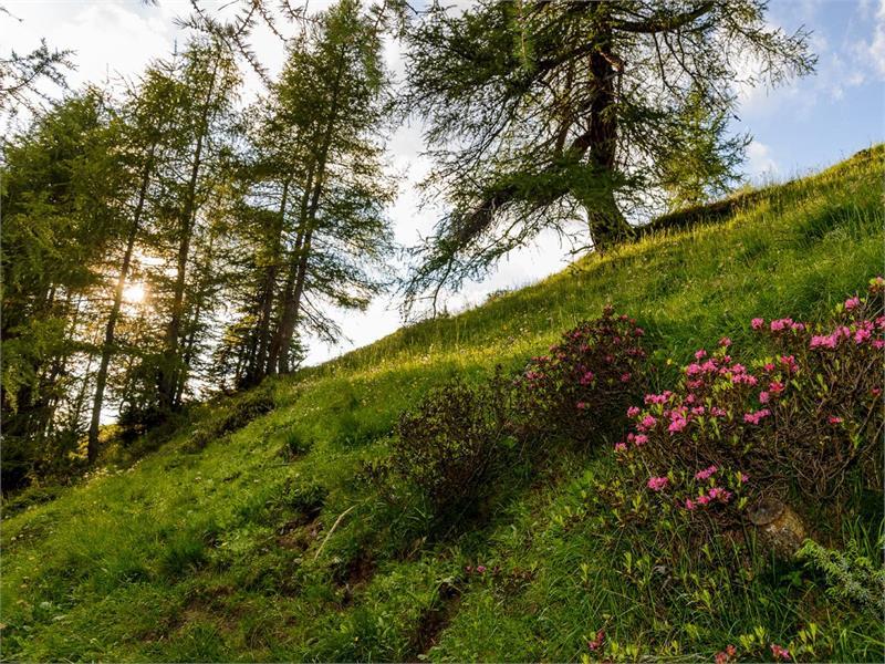 Durch Wiesen und Wälder