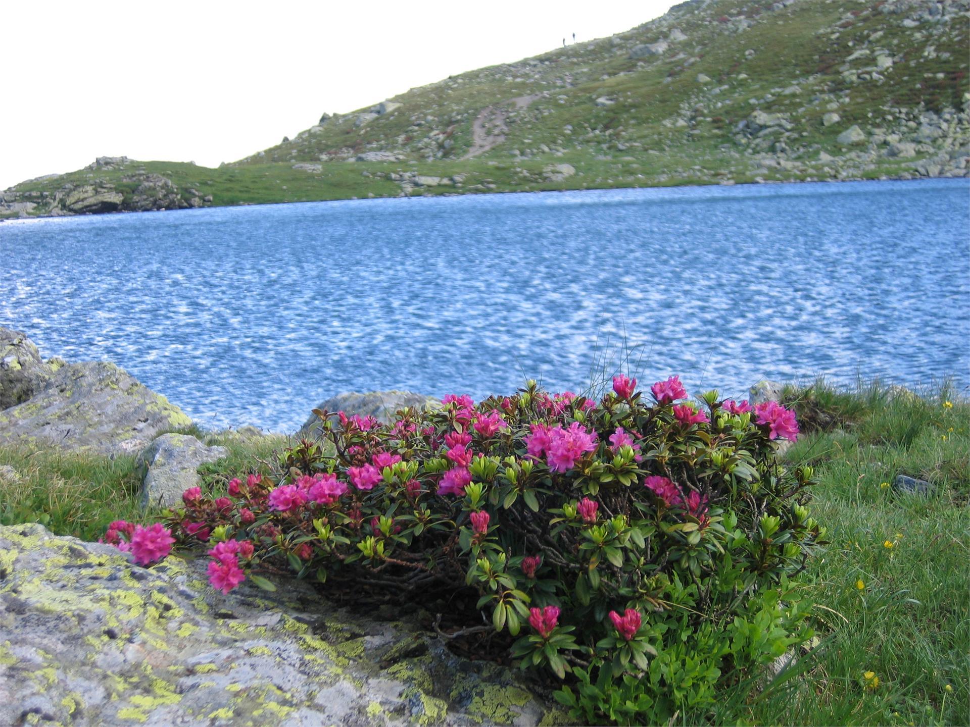 Escursione guidata alla baita Brugger Schupfe e al Lago di Rodella/Geführte Bergwanderung zur Brugger Schupfe und zum Radlsee