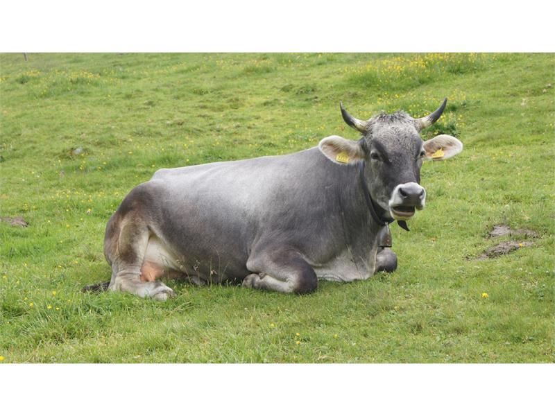 Alloggi in Val Venosta - Agriturismo Tendershof