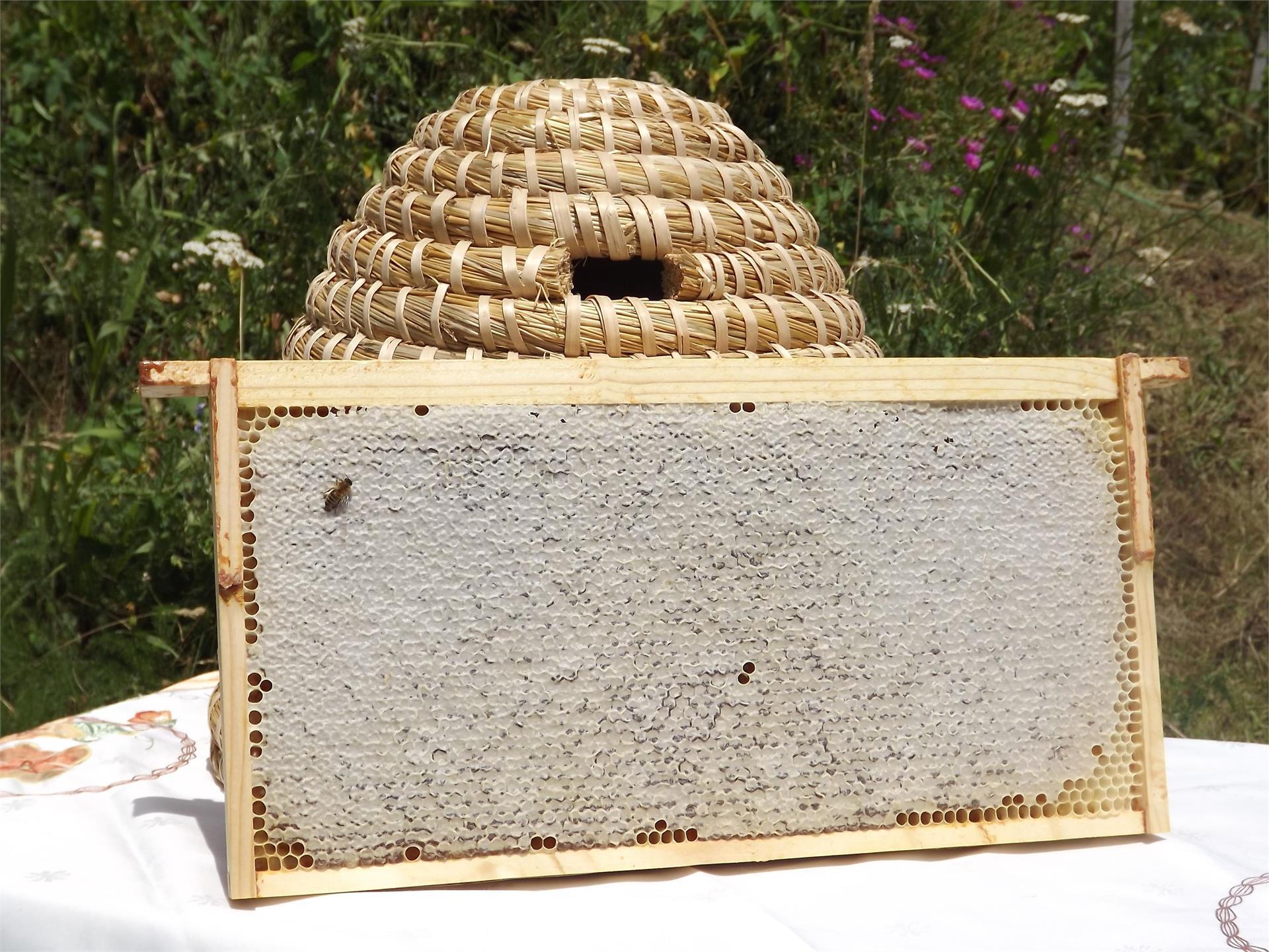 Beekeeping Wieser Erwin