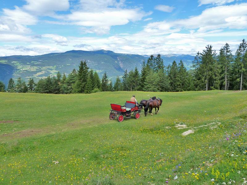 Carrozza trainata da cavalli in estate