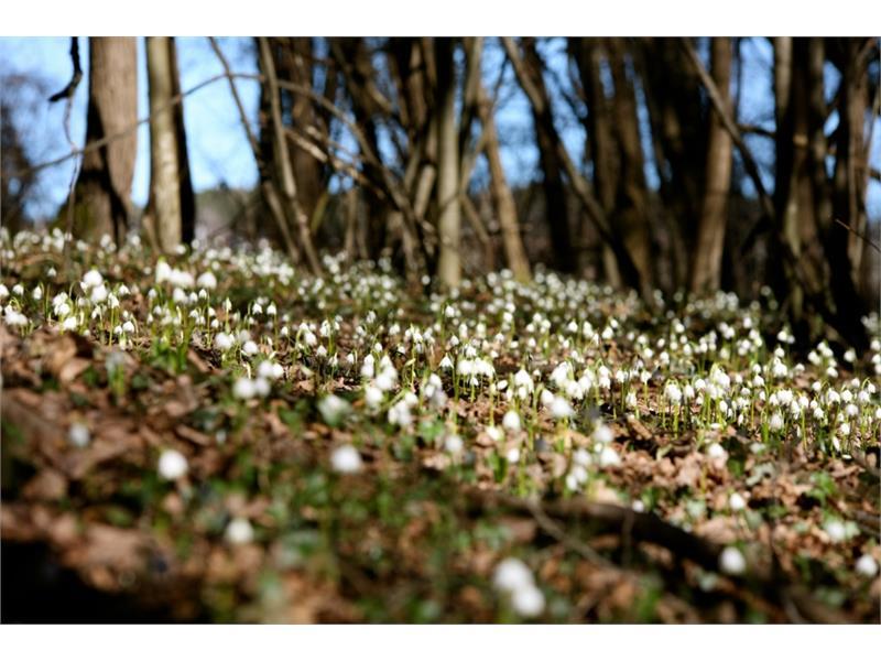 Blumenteppich im Frühlingstal