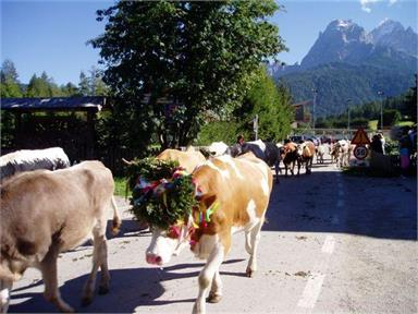 Return of the cattle from the mountain pastures - parade and festivity