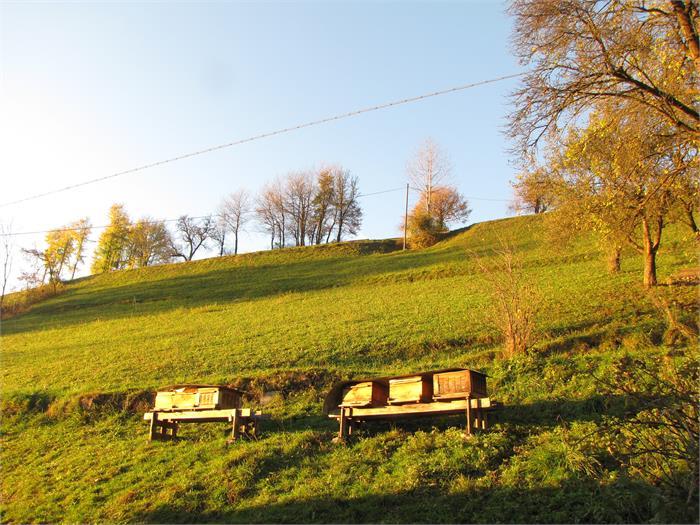 Bienenstöcke- Hieblerhof, Völs am Schlern