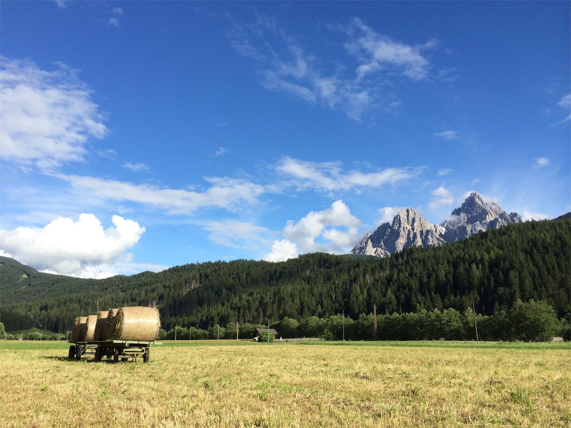 Versciaco/Vierschach meadows