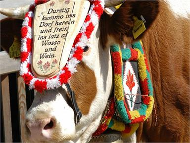 Golden³Dolomites: Festivity for the return of the cows from the alpine pastures