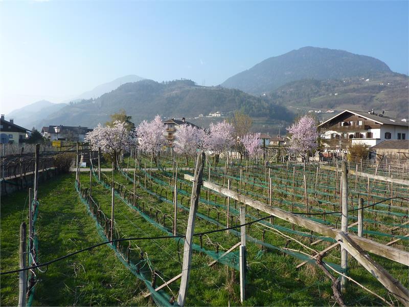 Weingarten und Gästehaus im Vorfrühling