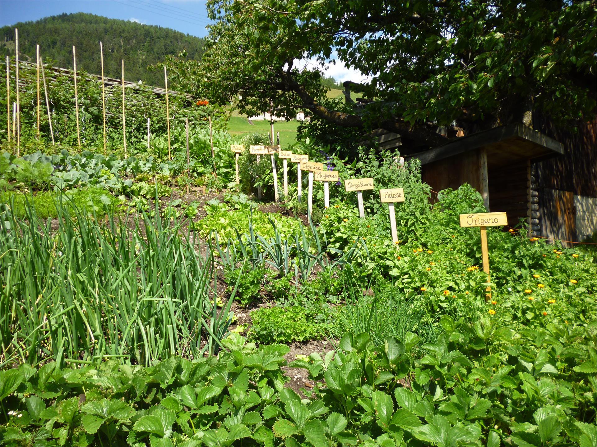 Unser Gemüse und Kräutergarten