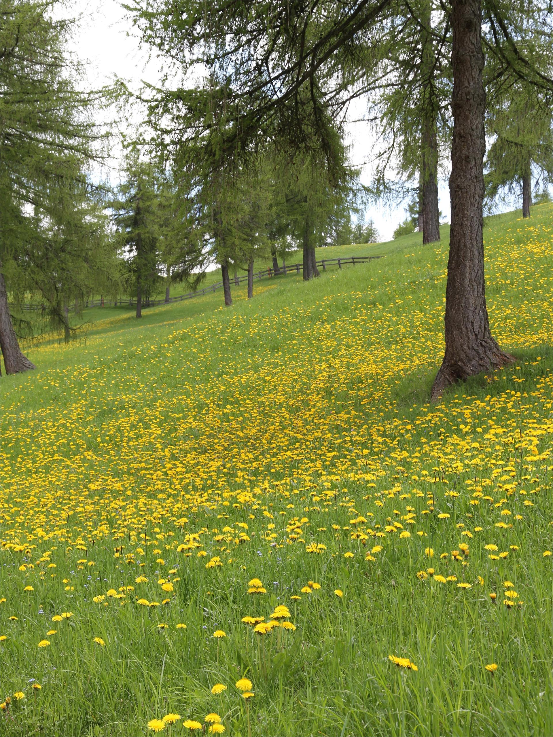 Wanderung auf die Blumenwiesen