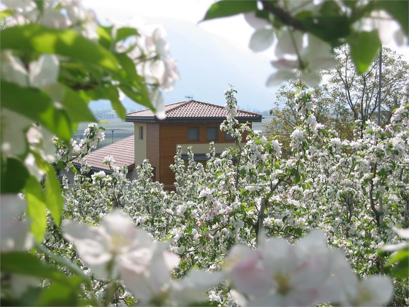 Ferienhaus Aronia im Frühling