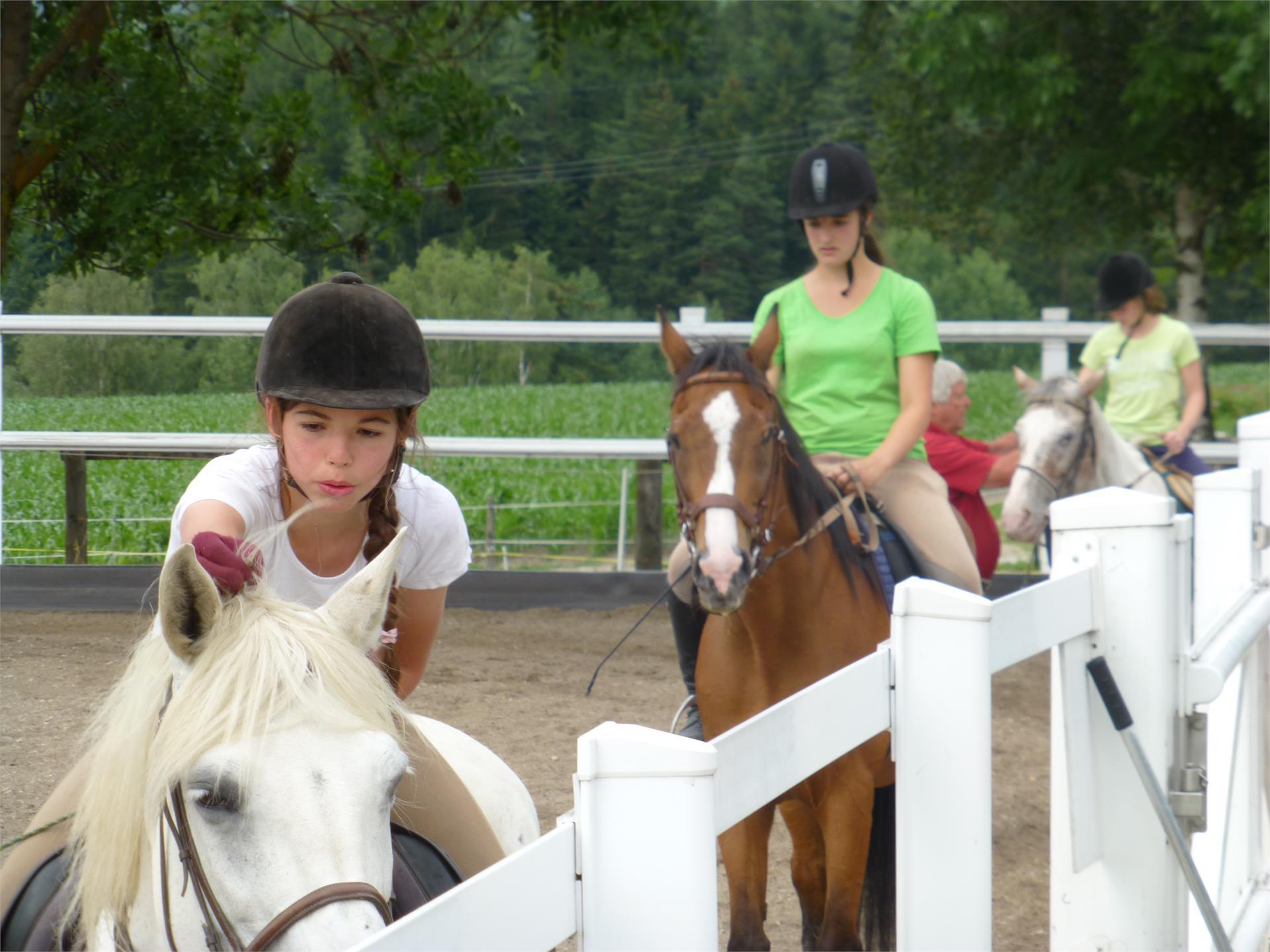 Equestrian farm Lechnerhof