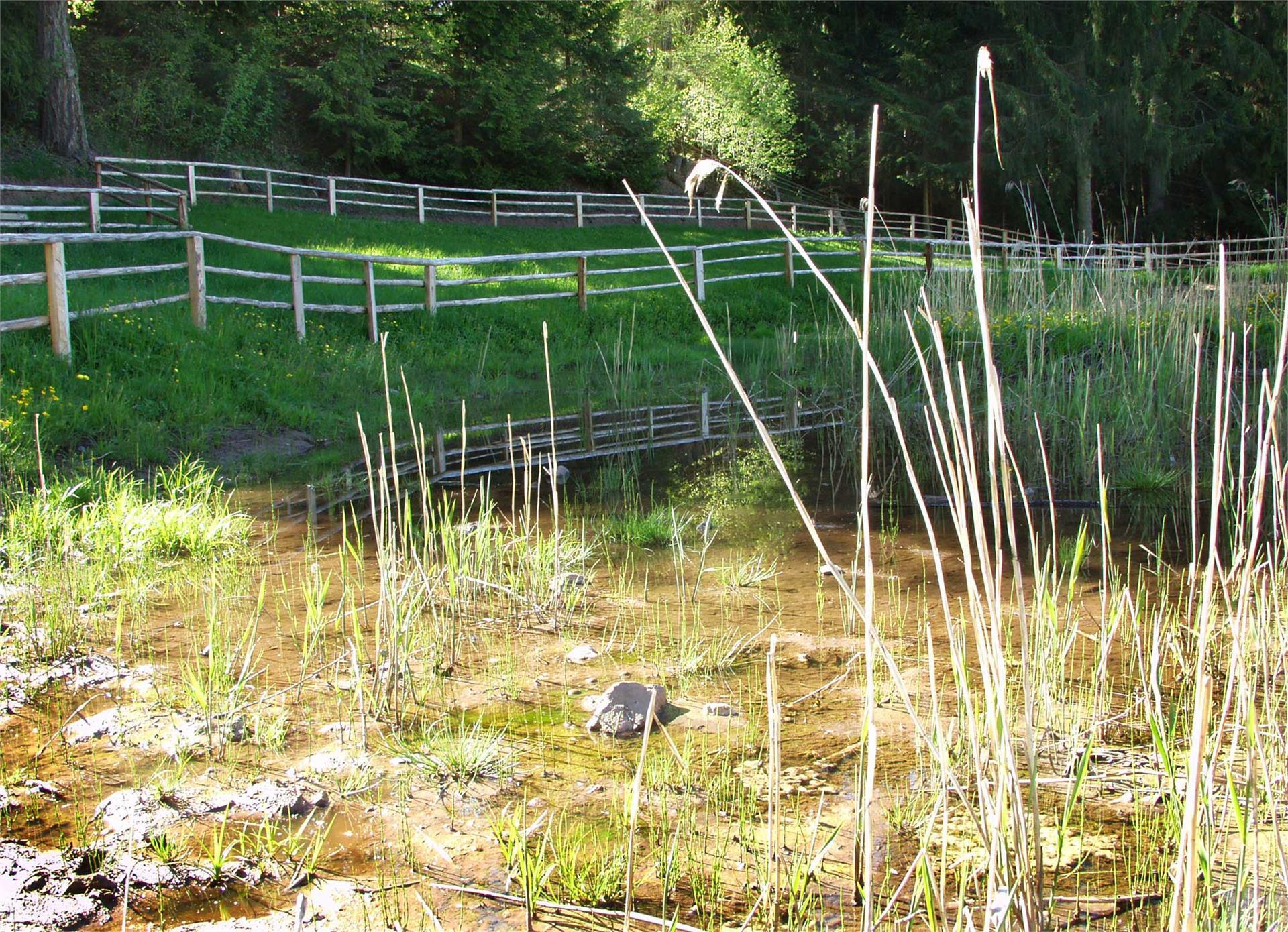 Biotop Veltierer Zente