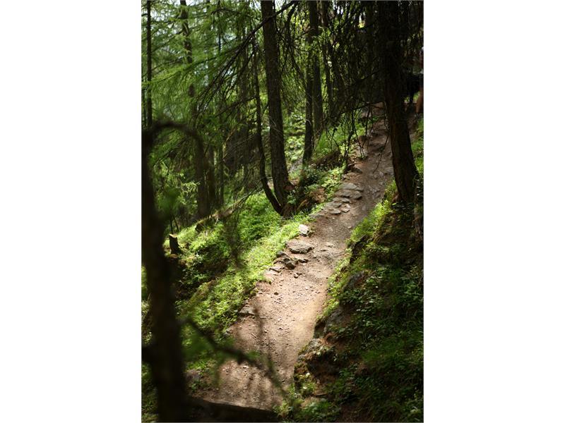 Aschbach-Naturnser Alm - Vigiljoch