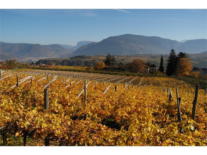 Sicht über die Weinreben im Herbst