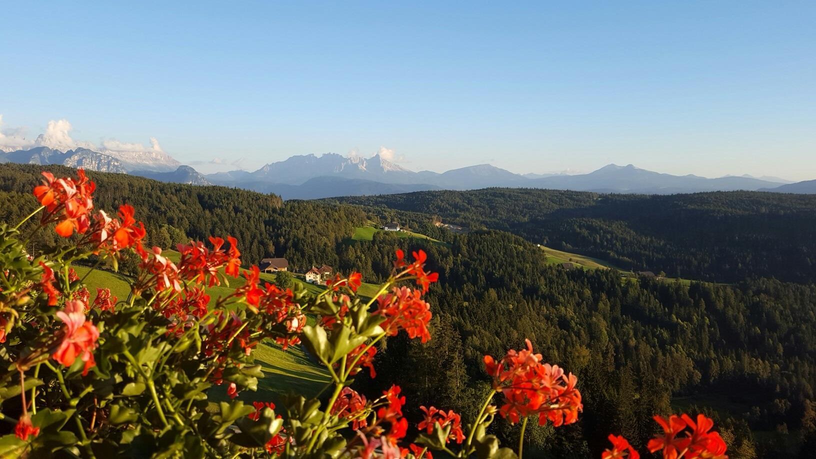 Untertreidnerhofn, panorama to the Dolomites
