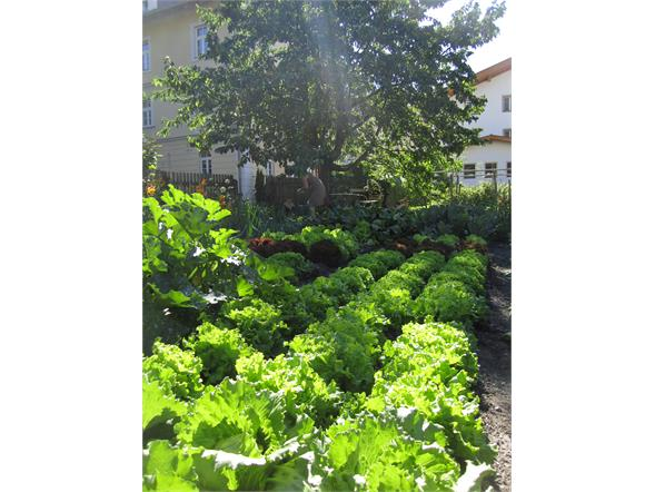The biological vegetables garden