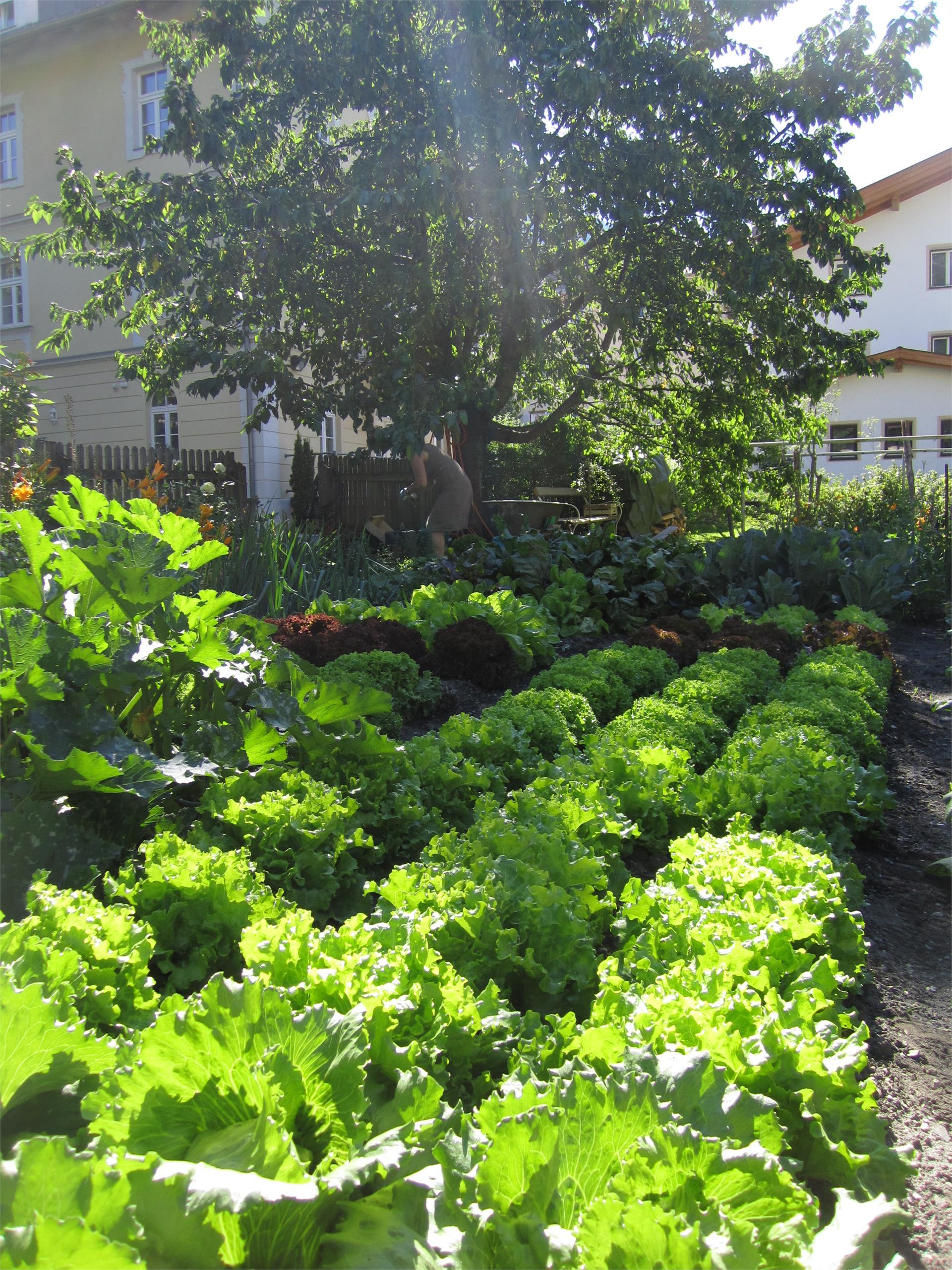 The biological vegetables garden