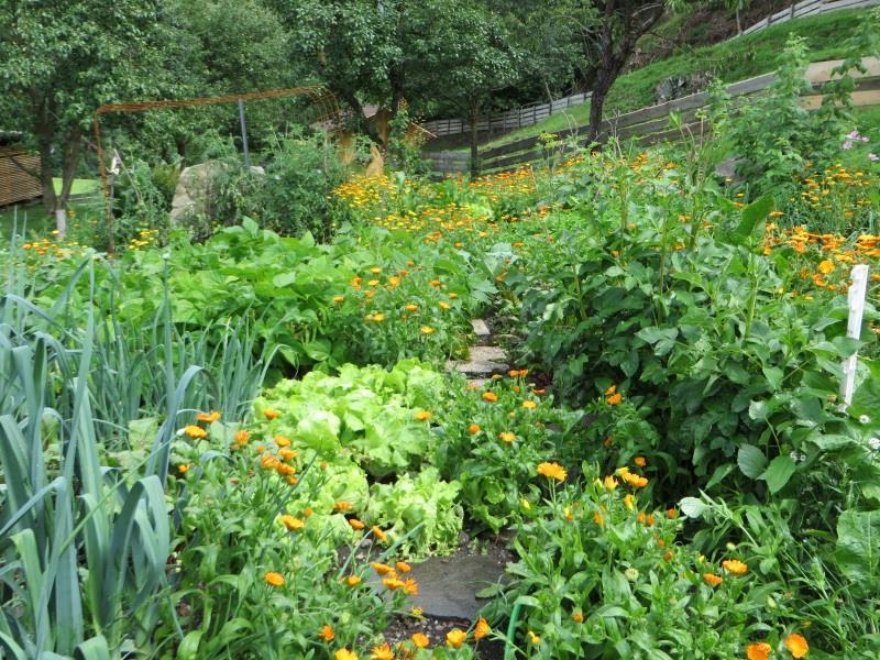 Der Gemüsegarten- Schantlhof, Völs am Schlern